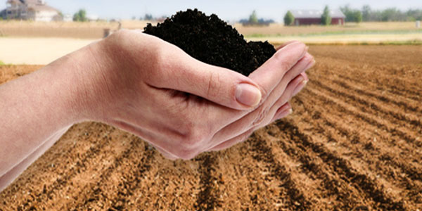 humic acid liquid manufacturer